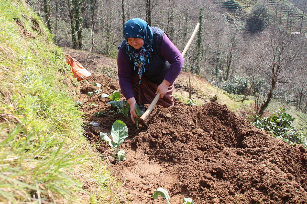 Doğu Karadeniz'de çay üreticilerine kısıtlama muafiyeti #7