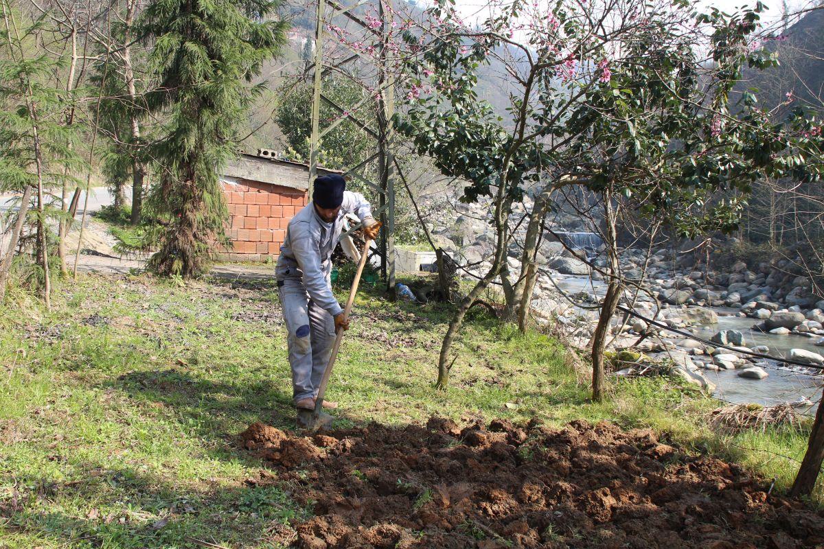 Doğu Karadeniz'de çay üreticilerine kısıtlama muafiyeti #8