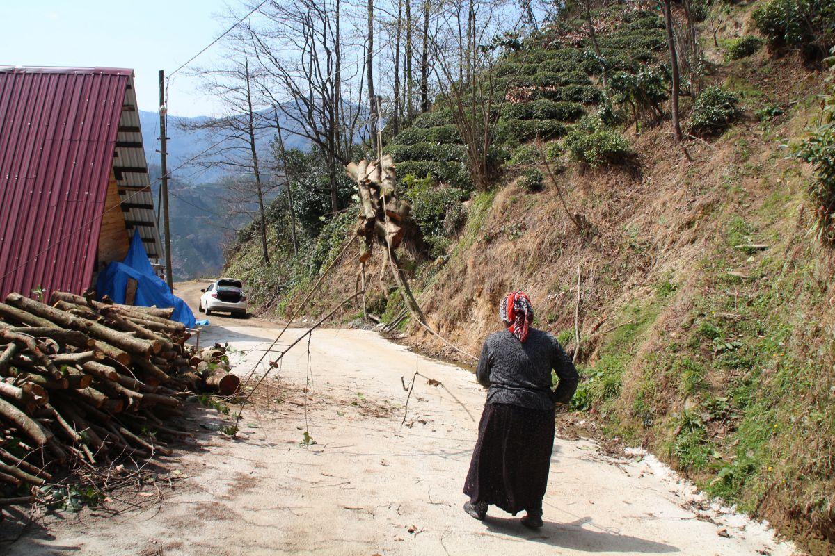 Doğu Karadeniz'de çay üreticilerine kısıtlama muafiyeti #6