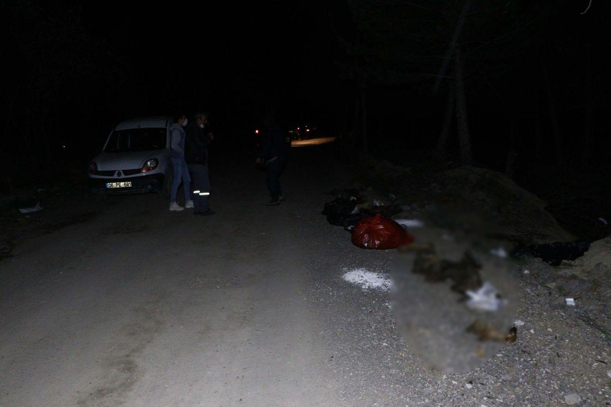 Ankara da damar yolu açılmış 30 köpek ölüsü bulundu #2
