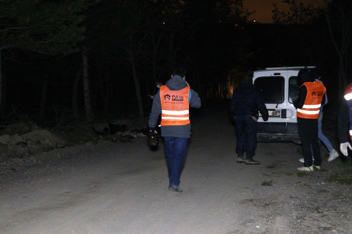Ankara da damar yolu açılmış 30 köpek ölüsü bulundu #4