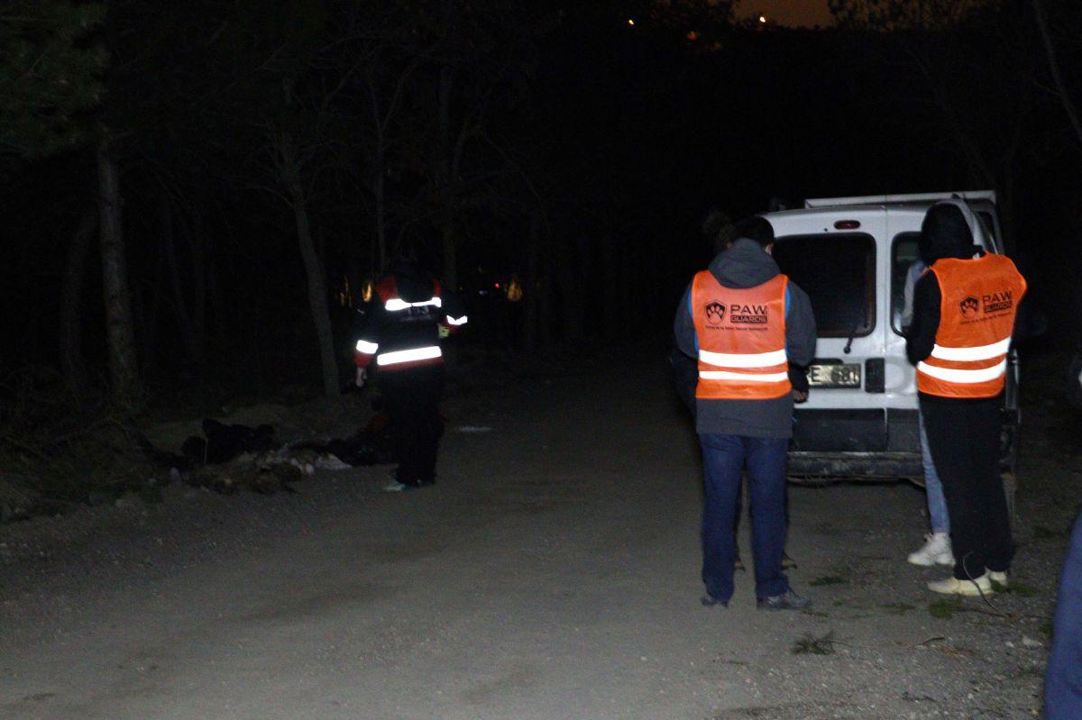 Ankara da damar yolu açılmış 30 köpek ölüsü bulundu #5