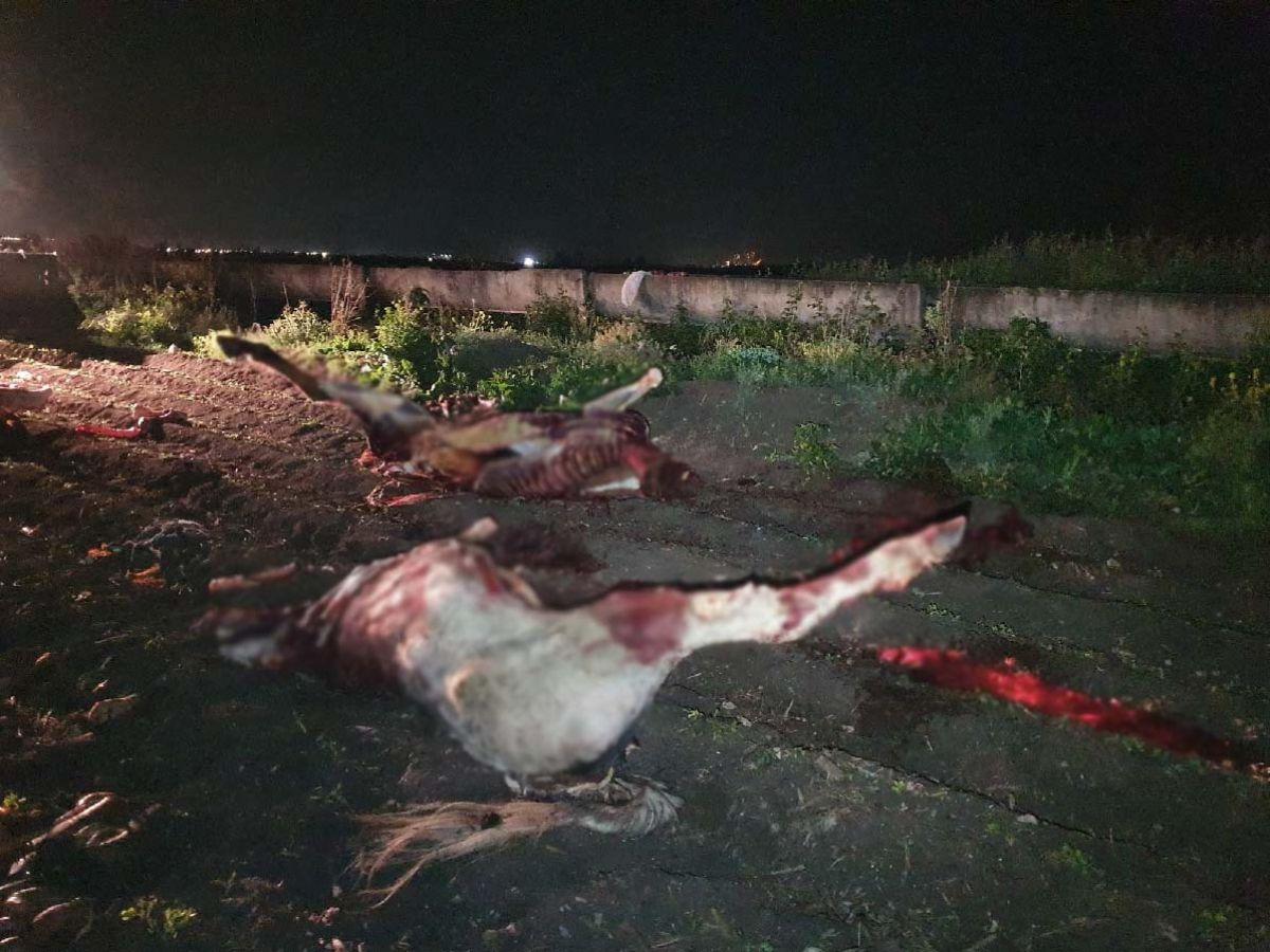 Adana da, at kesimi yapanlara suçüstü #3