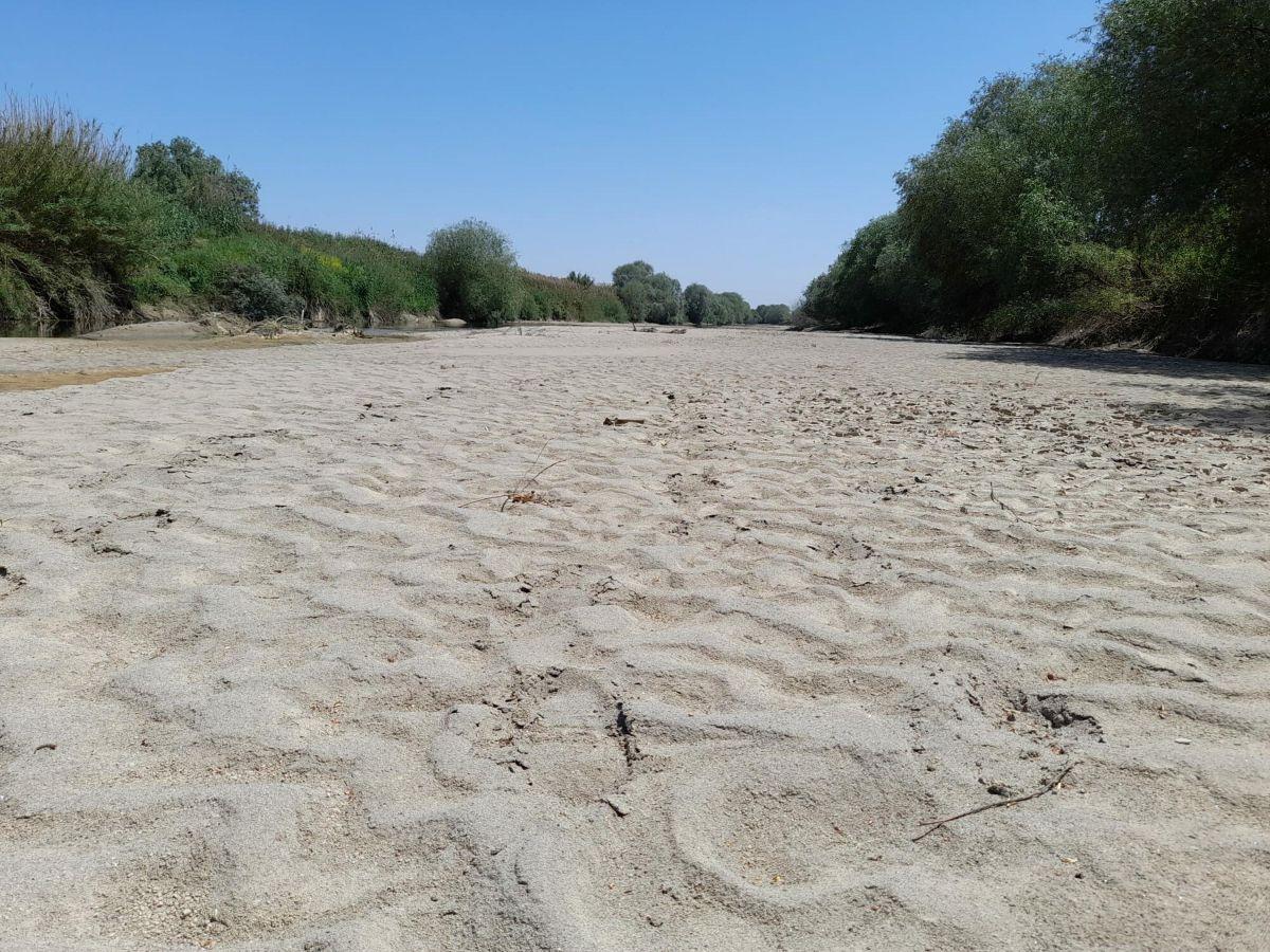 Büyük Menderes Nehri kurudu #9