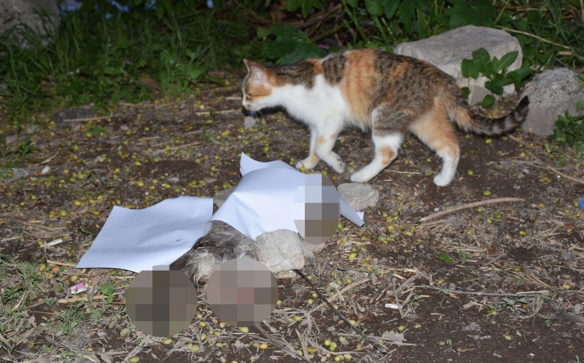 Sivas ta bir hayvansever kayıp kedisini patileri ve kuyruğu kesik halde ölü buldu #5