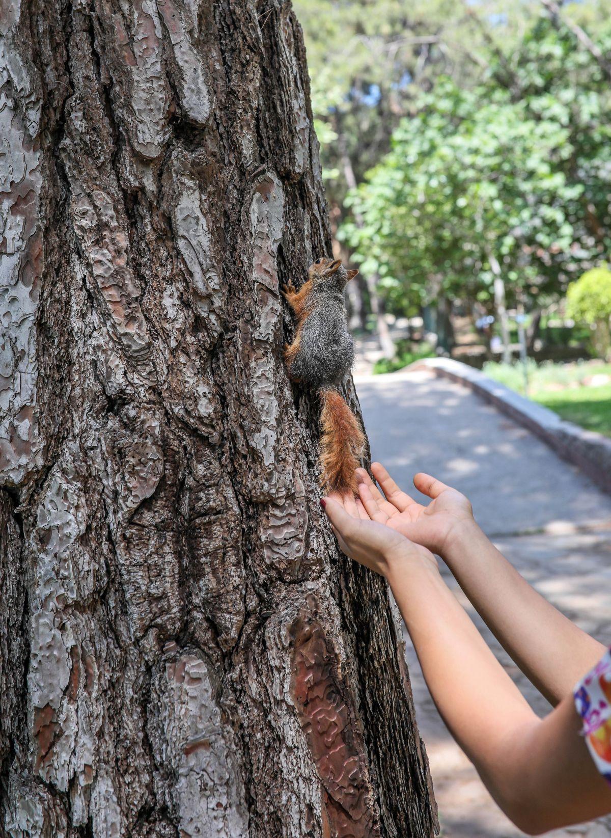 Antalya da sincap büyüten kadın, ağlayarak doğaya bıraktı #6