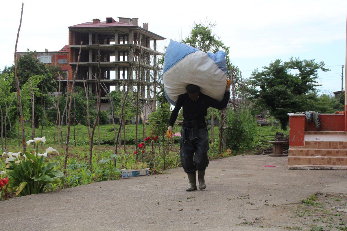 Rize de Afrikalı işçiler, bu yıl da çay topluyor #1