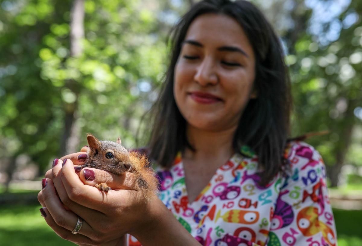 Antalya da sincap büyüten kadın, ağlayarak doğaya bıraktı #1