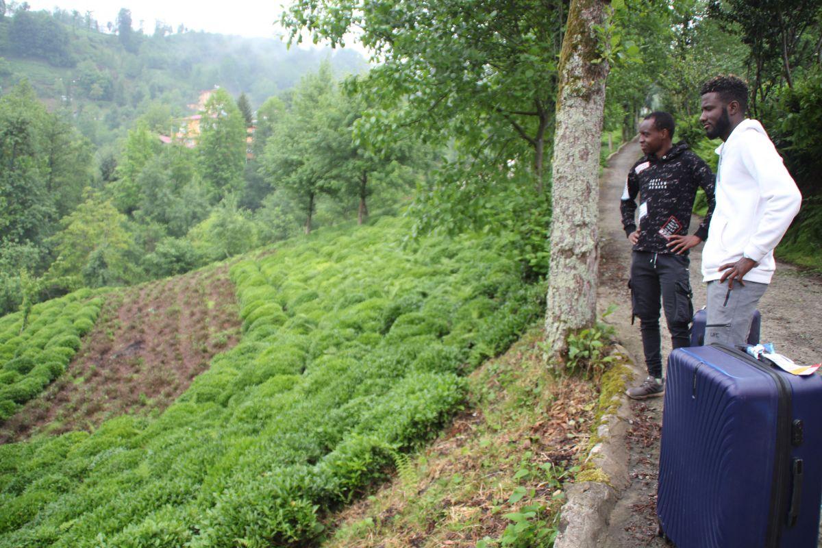 Rize de Afrikalı işçiler, bu yıl da çay topluyor #2