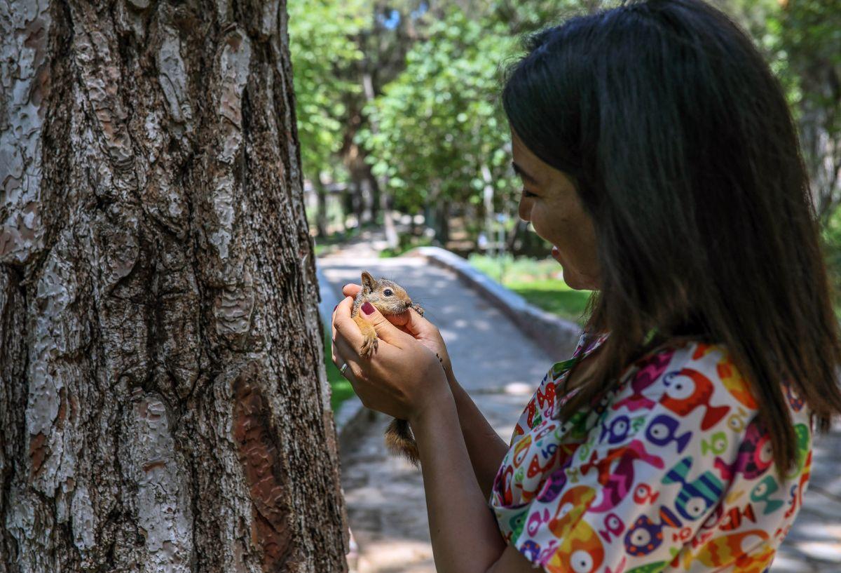 Antalya da sincap büyüten kadın, ağlayarak doğaya bıraktı #5