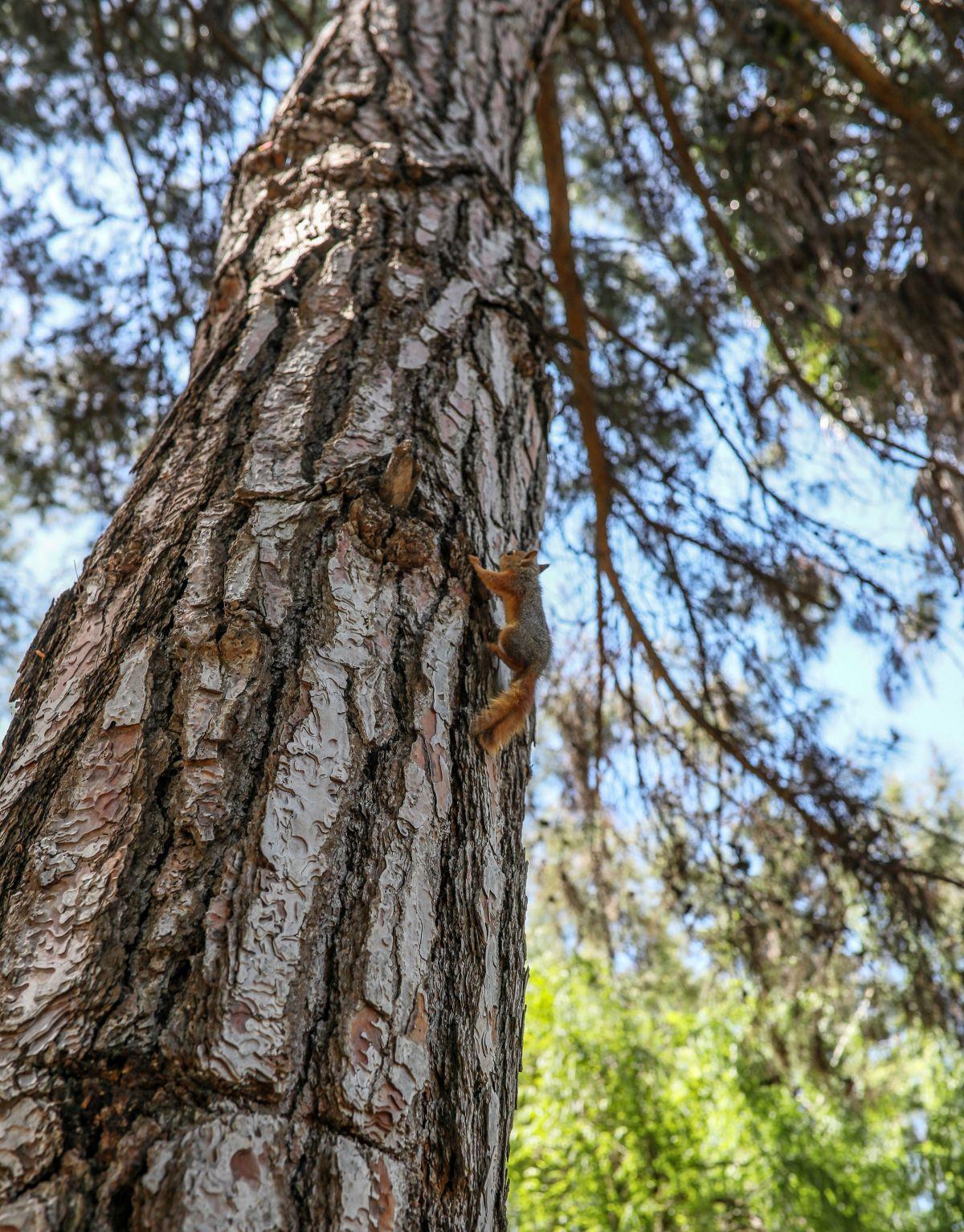 Antalya da sincap büyüten kadın, ağlayarak doğaya bıraktı #7