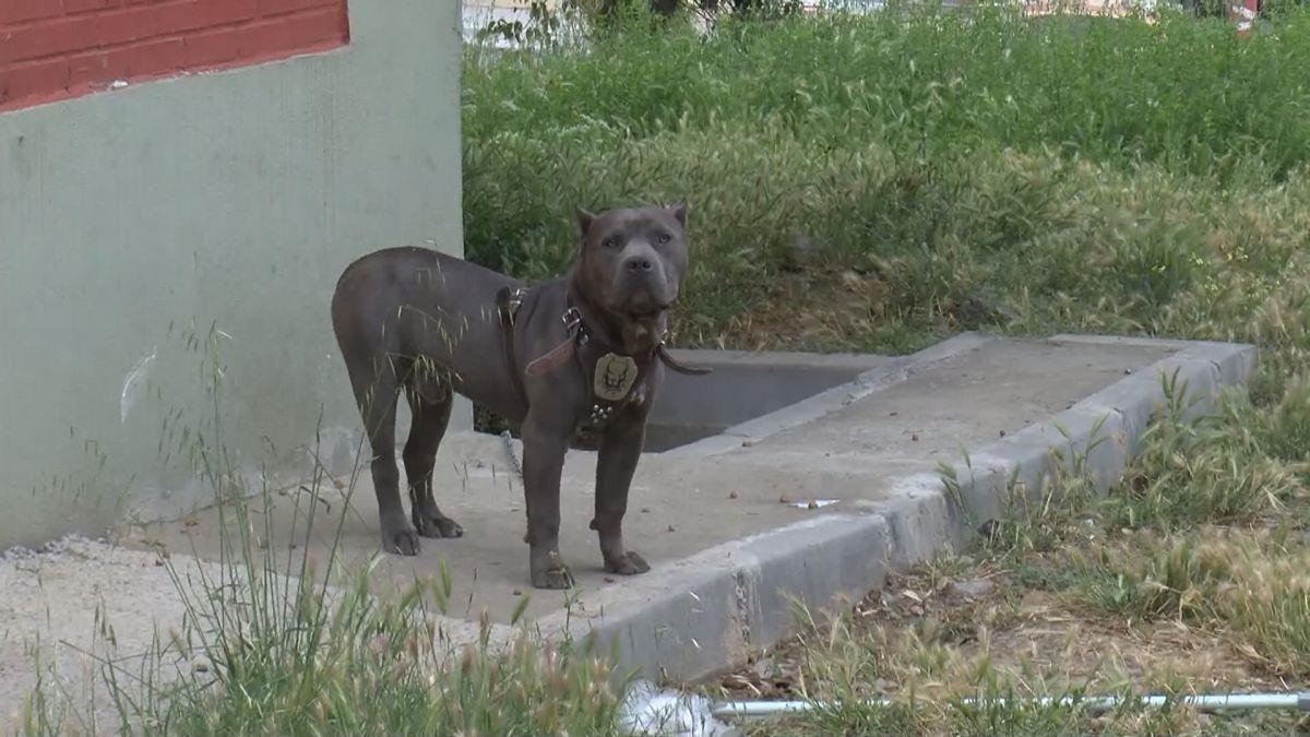 Başakşehir de tamir için bırakılan polis otosuyla tur atan çıraklar köpek çaldı #7