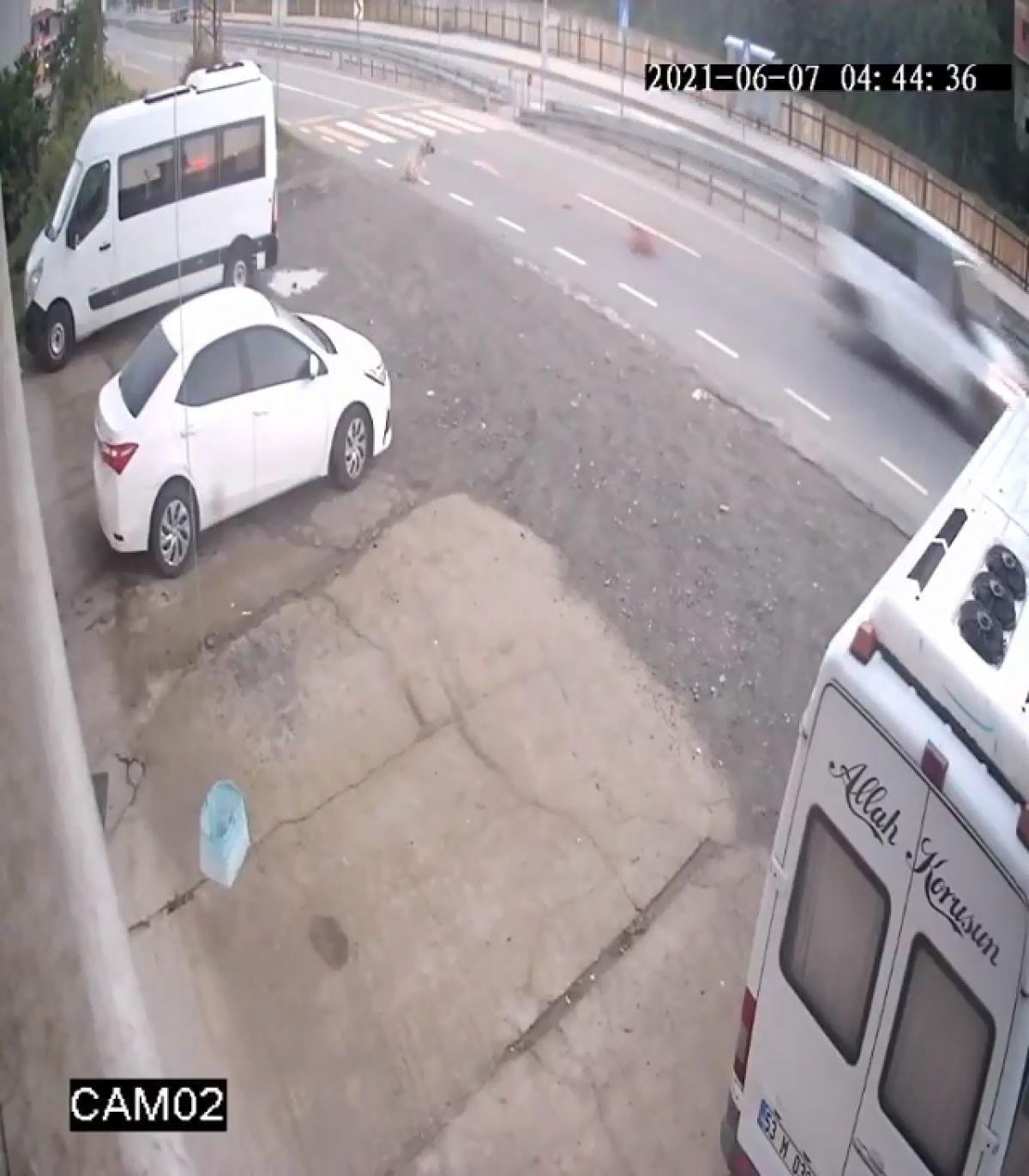 Rize de köpeği öldüren sürücüye 966 TL ceza verildi #5