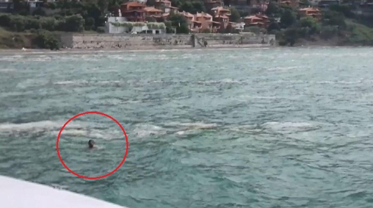 Marmara Denizi ndemüsilaj istilasındaki sularda can pazarı yaşandı #2