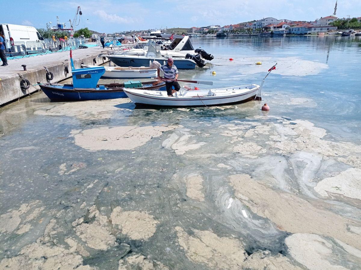Kocaeli de dalgıçlar, 15 metre derinden Marmara Denizi için haykırdı #9