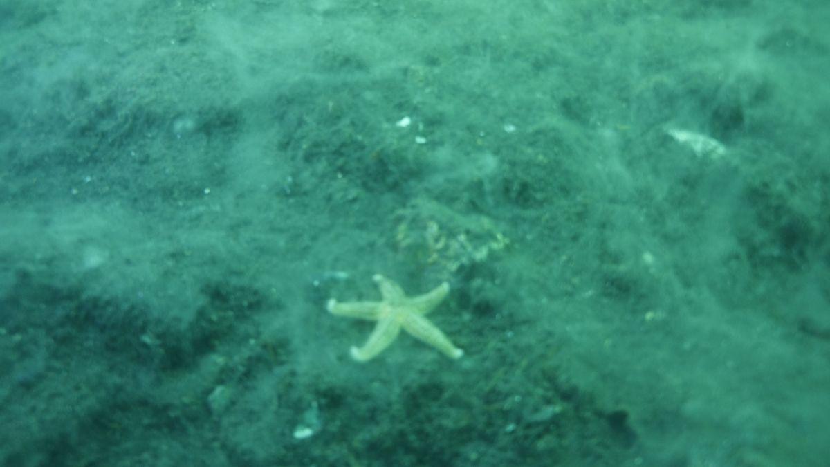 Kocaeli de dalgıçlar, 15 metre derinden Marmara Denizi için haykırdı #10