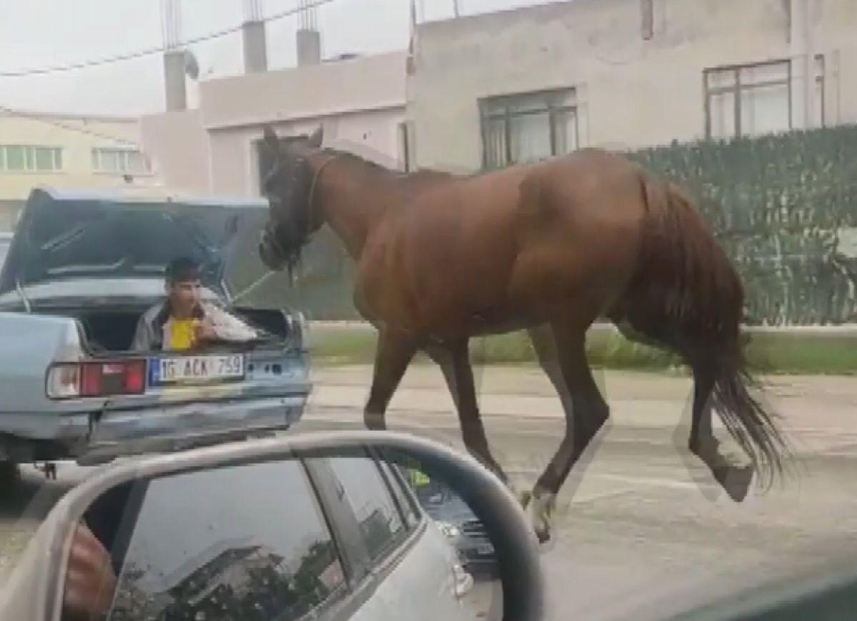 Bursa da bir aracın bagajında oturan çocuk, seyir halindeyken bir atı peşinden sürükledi #1