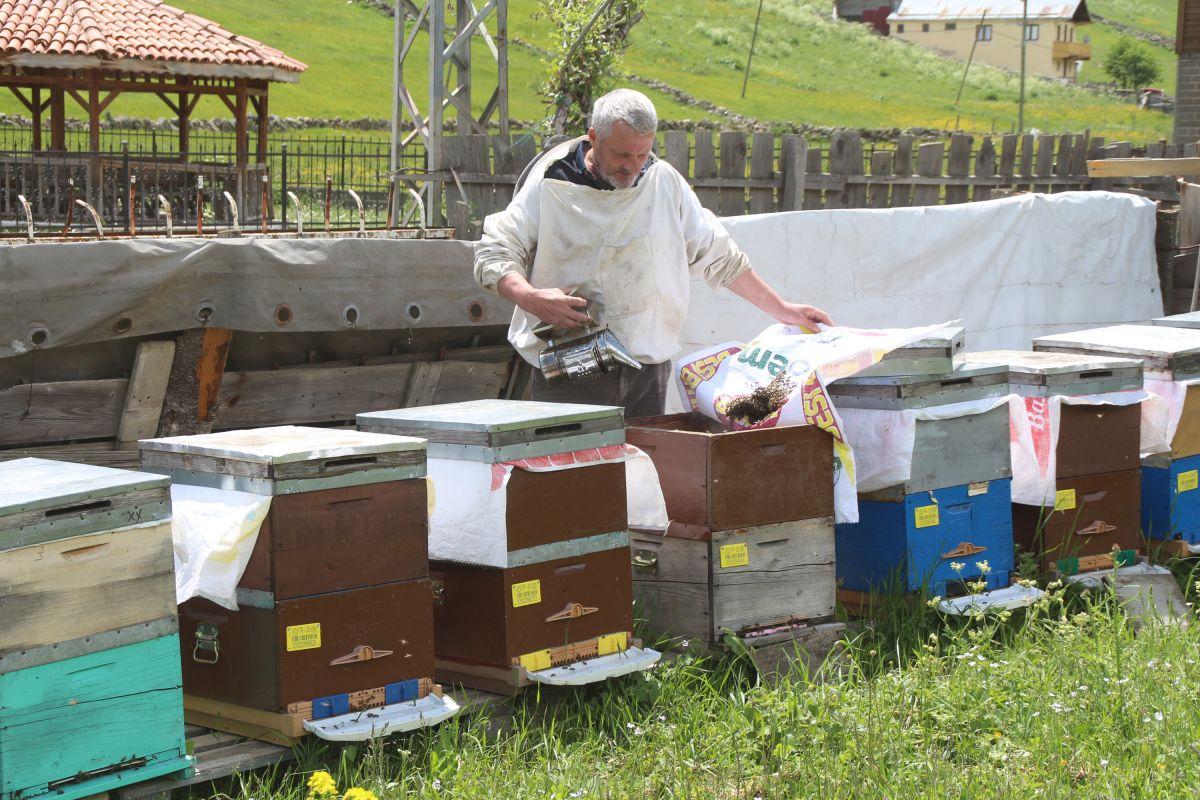Rize de Anzer balının fiyatı açıklanmadan siparişler başladı #2