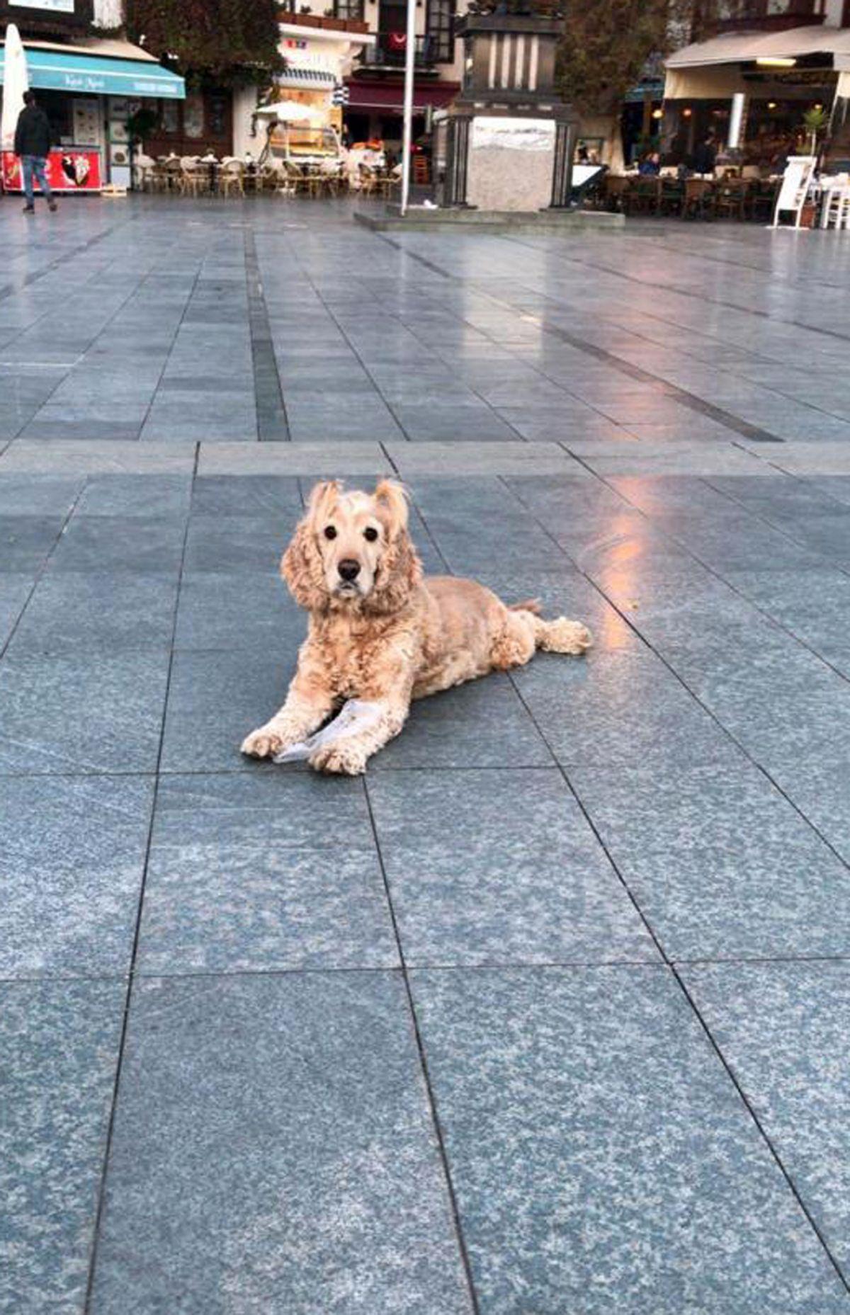Antalya daki köpek, artık yaşamadığı evden uzaklaştırıldı #4
