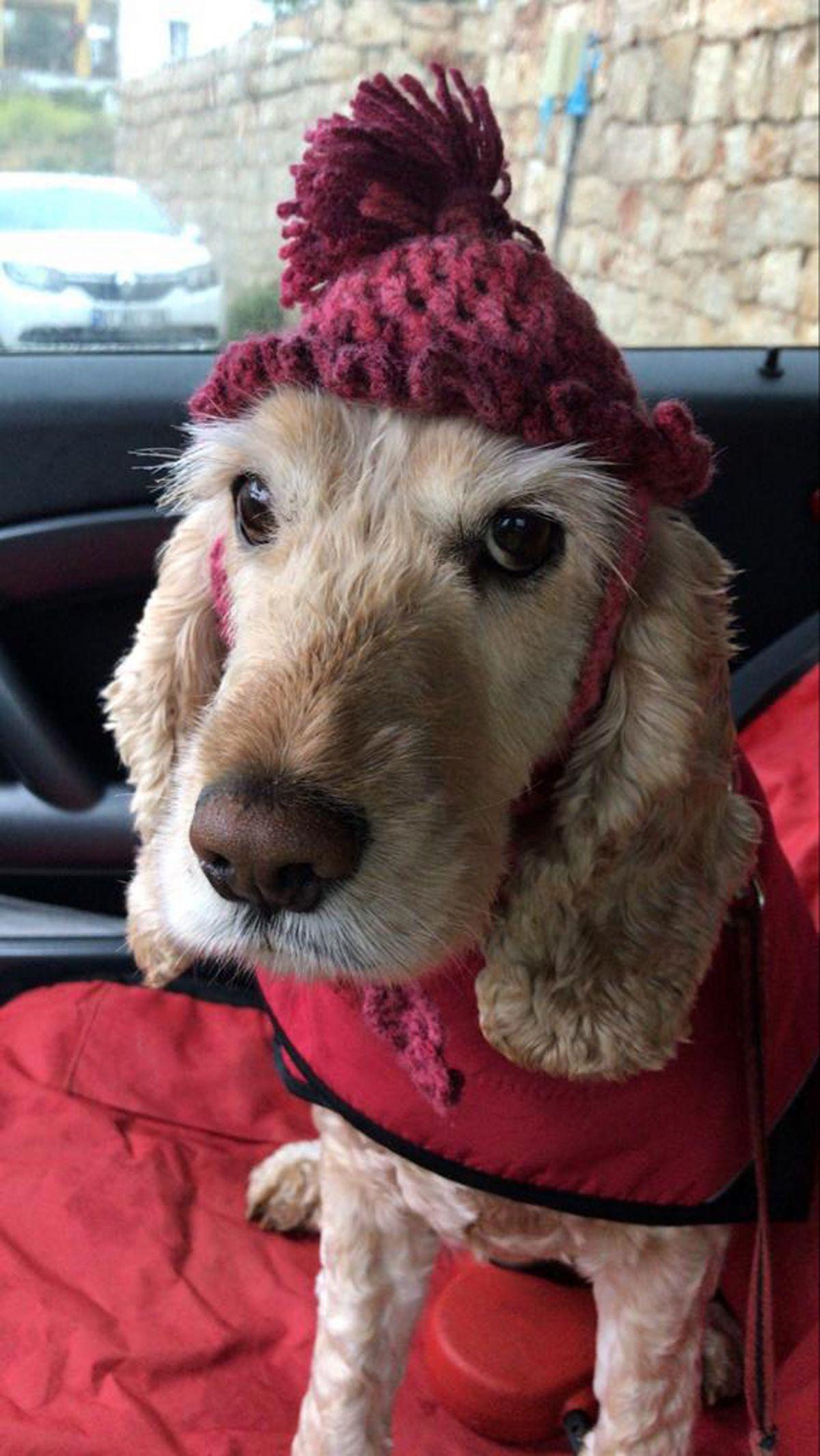 Antalya daki köpek, artık yaşamadığı evden uzaklaştırıldı #3