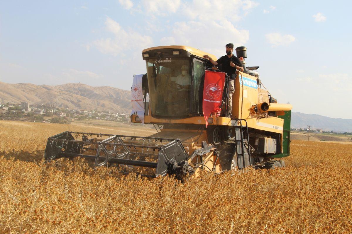 Şırnak'ta çiftçiler ilk defa aspir hasadı yaptı #4