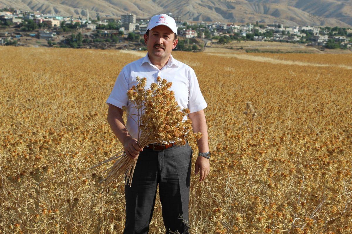 Şırnak'ta çiftçiler ilk defa aspir hasadı yaptı #6