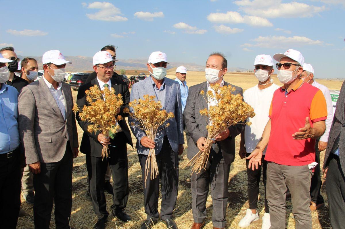 Şırnak'ta çiftçiler ilk defa aspir hasadı yaptı #2