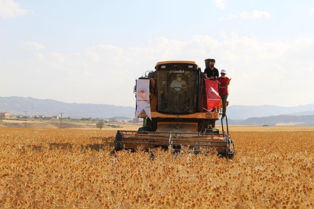 Şırnak'ta çiftçiler ilk defa aspir hasadı yaptı #5
