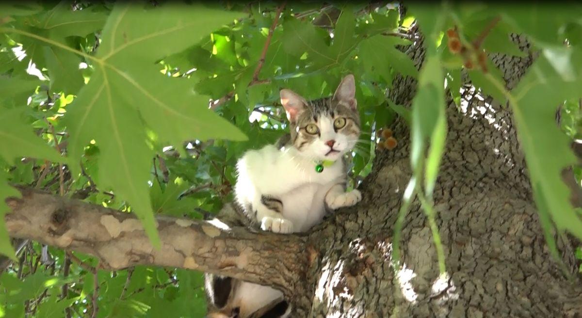 Isparta da köpekten korkan Boncuk, ağaçta kaldı #1