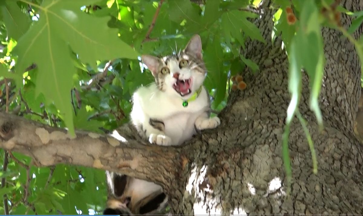 Isparta da köpekten korkan Boncuk, ağaçta kaldı #2