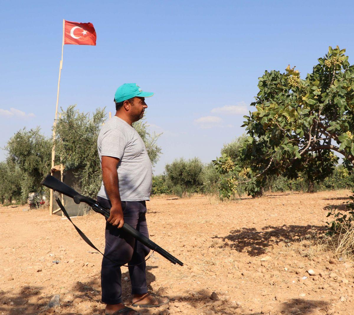 Gaziantep te bekçiler, silahla Antep fıstığı nöbeti tutuyor #1