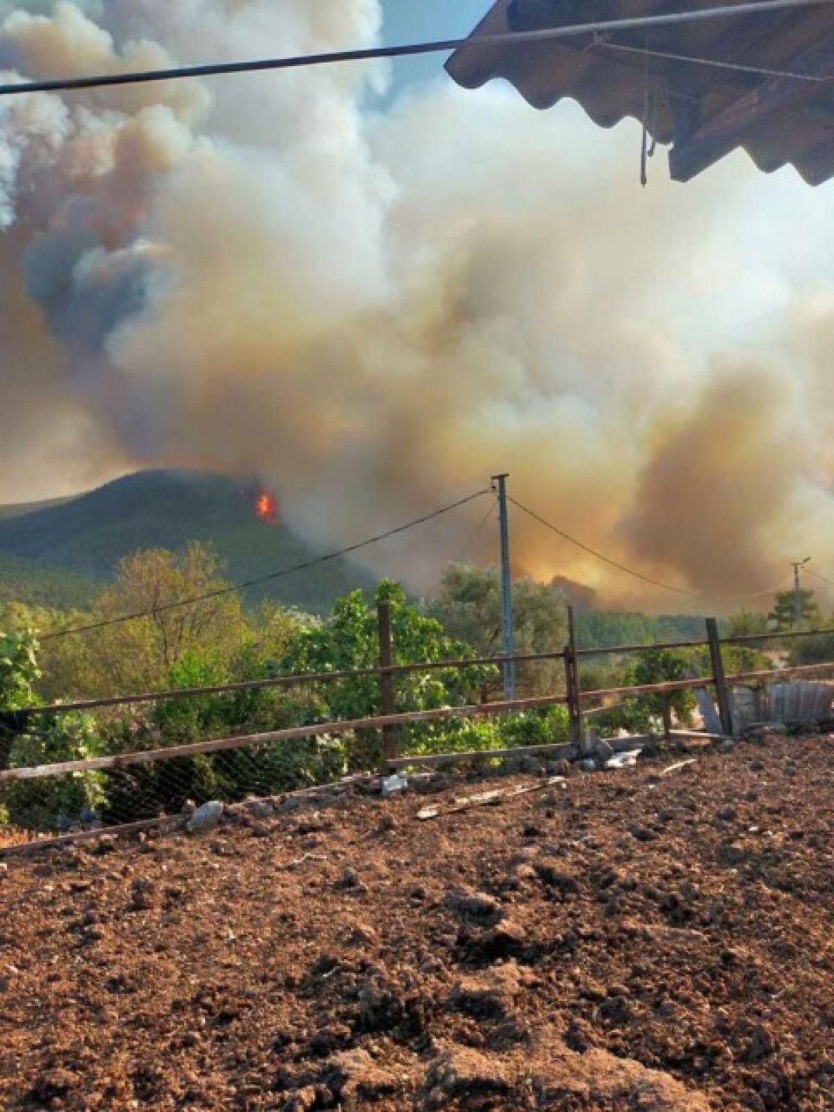 Bodrum da orman yangını #5
