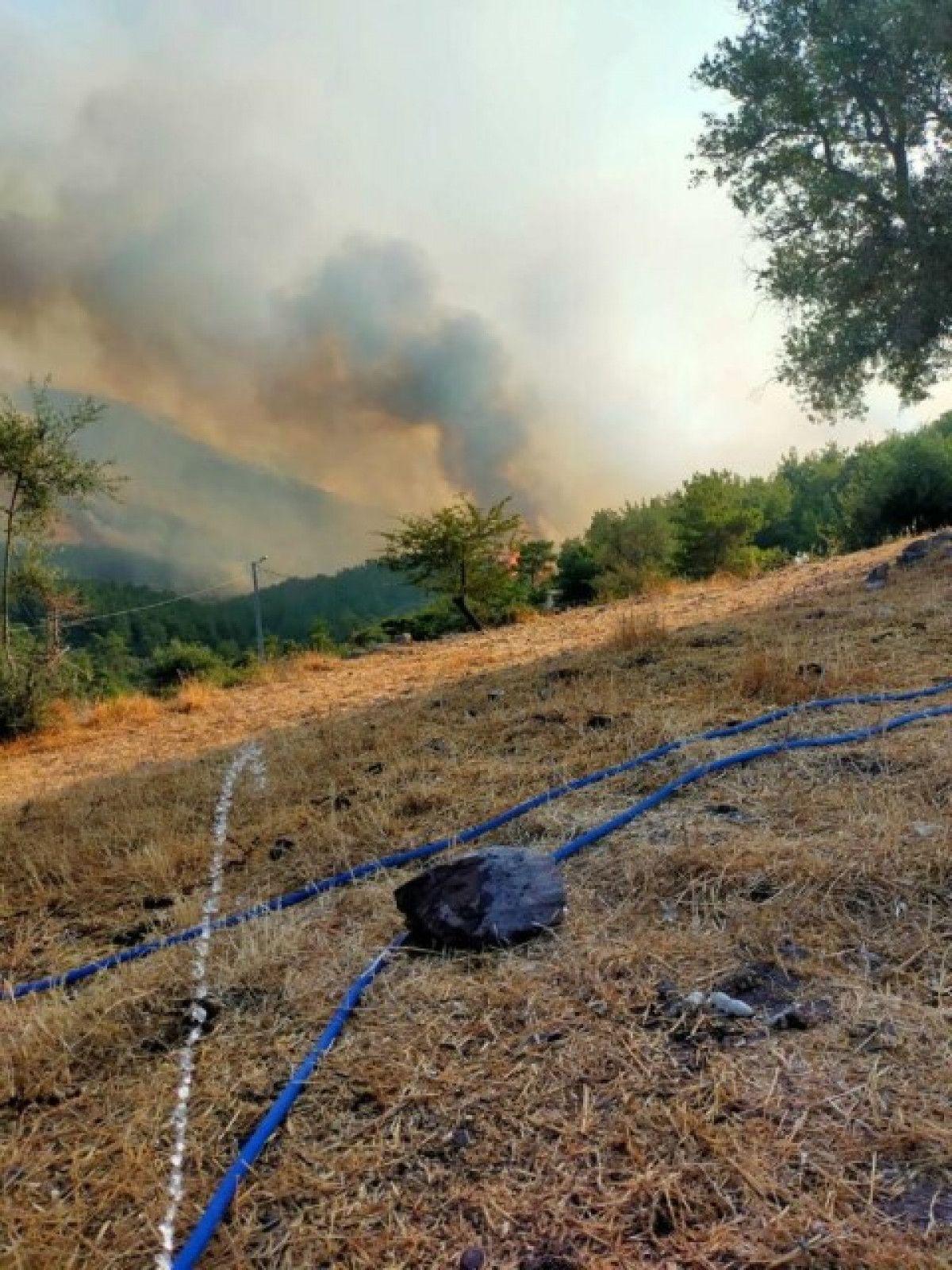 Bodrum da orman yangını #4