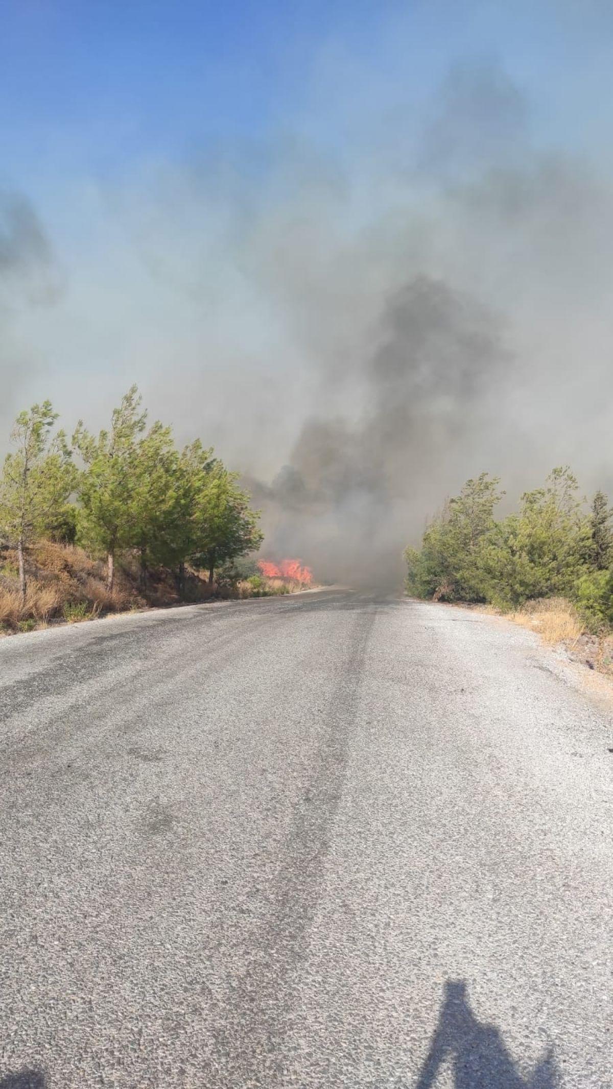 Bodrum da orman yangını #9