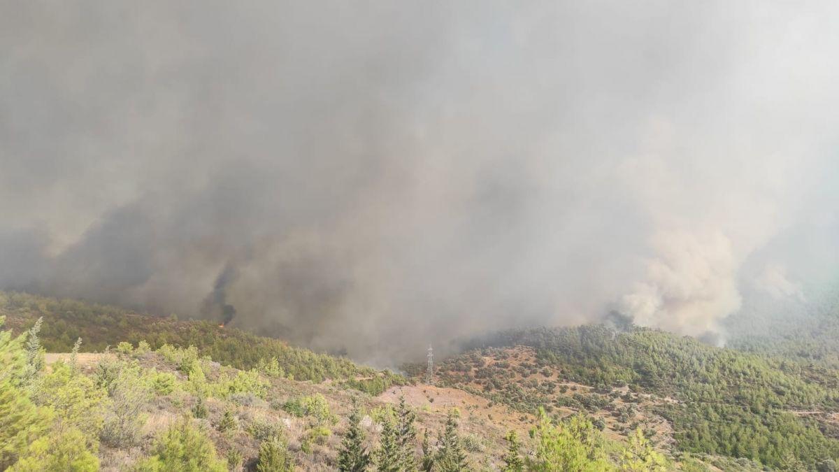 Bodrum da orman yangını #8