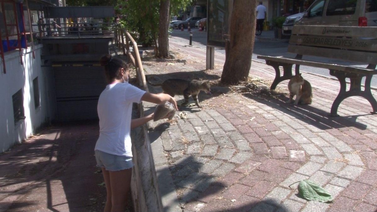 Üsküdar da bir şahsın sokak kedisini yerden yere vurduğu anlar kamerada #3