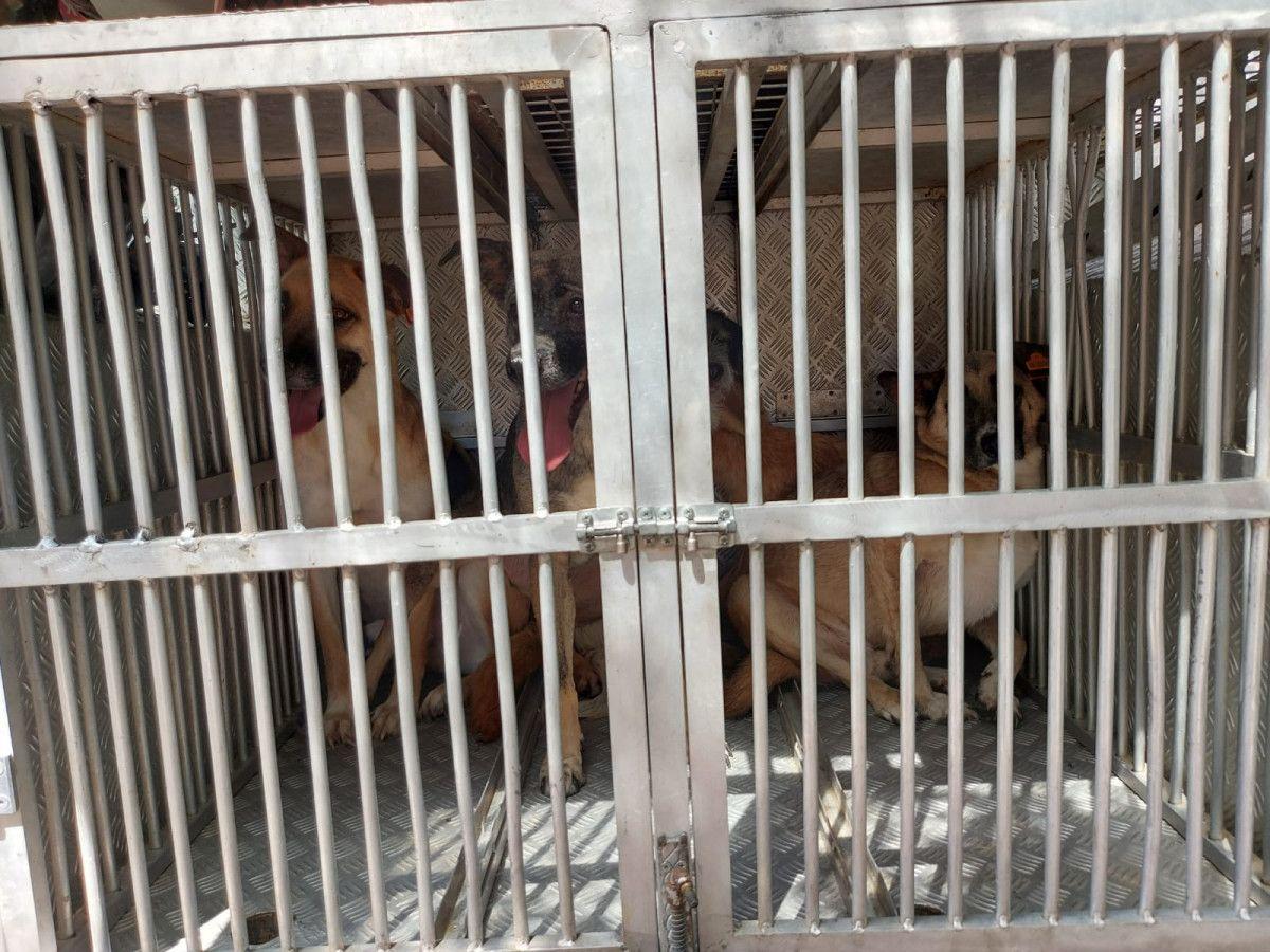 Ankara da bahçesinde 11 köpeğin cansız bedeni bulunan kadın, tutuklandı #6