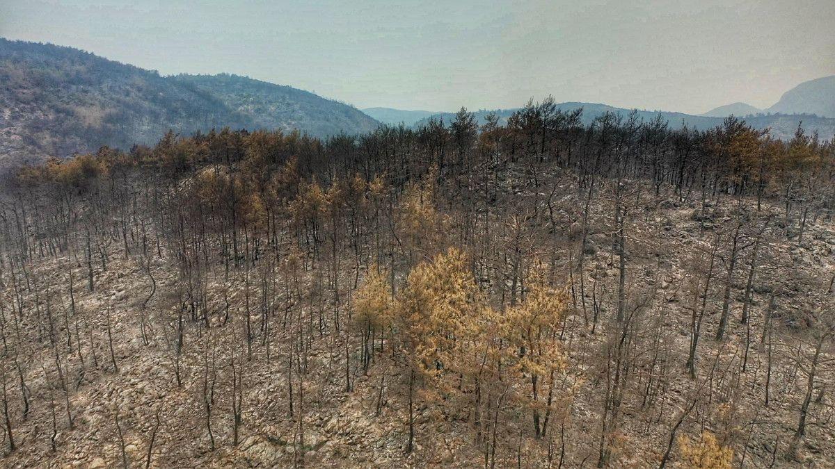 Bodrum ve Milas ta yanan alanlar drone ile havadan görüntülendi #10
