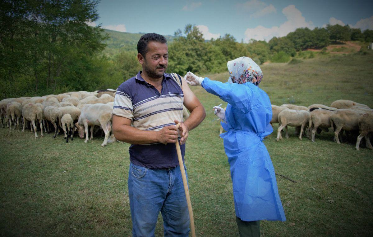 Bursa da çobanlar, yaylada koyun otlatırken aşılarını oldu #7