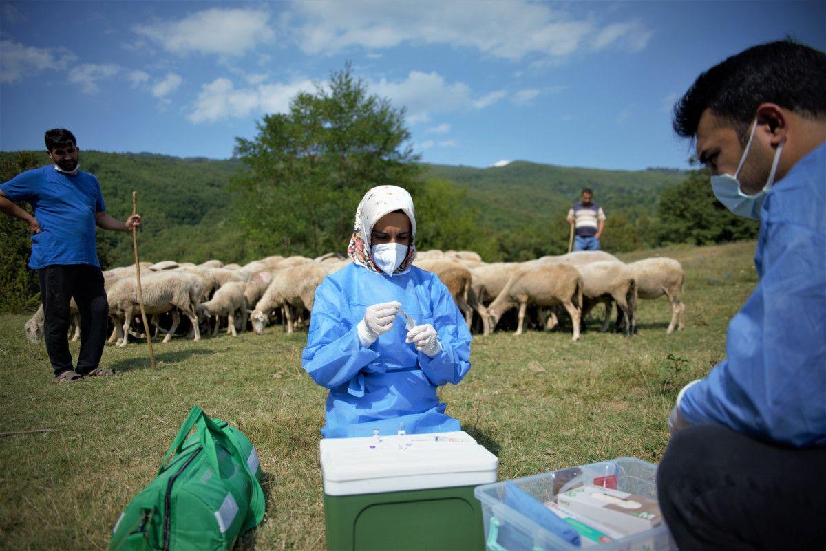 Bursa da çobanlar, yaylada koyun otlatırken aşılarını oldu #4