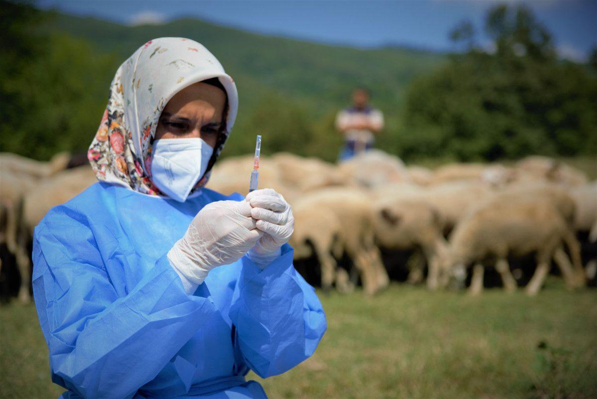 Bursa da çobanlar, yaylada koyun otlatırken aşılarını oldu #3