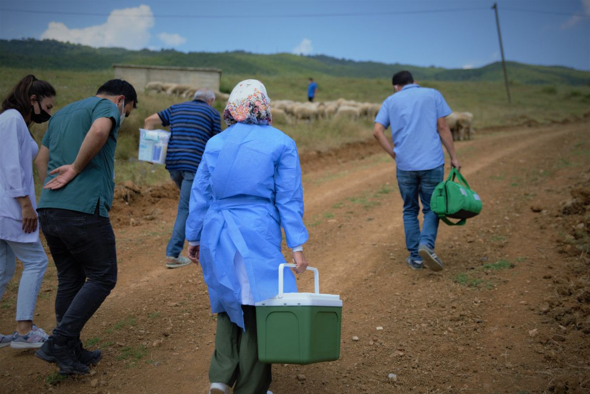 Bursa da çobanlar, yaylada koyun otlatırken aşılarını oldu #5