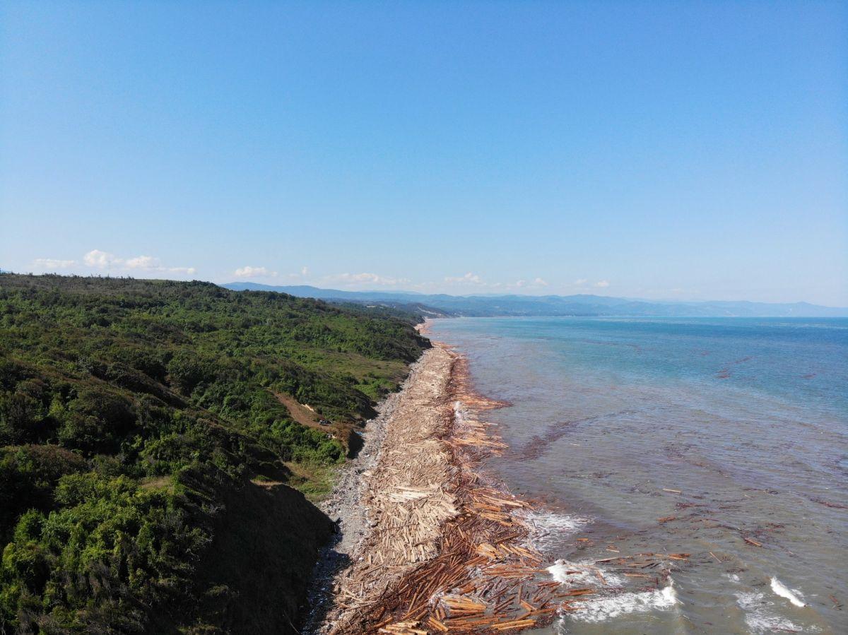 Karadeniz de sel sularıyla toplanan tomruklar, denizi örtü gibi kapladı #2