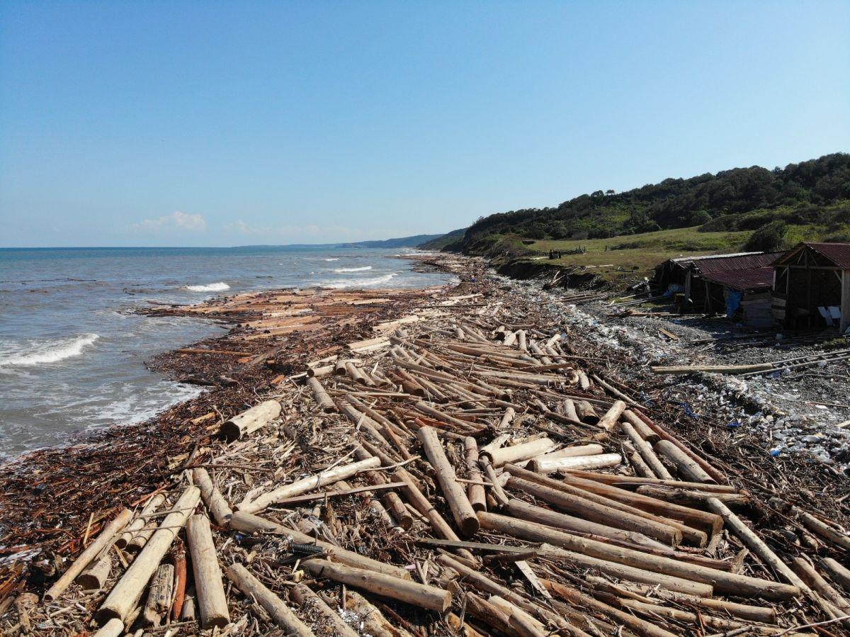 Karadeniz de sel sularıyla toplanan tomruklar, denizi örtü gibi kapladı #3