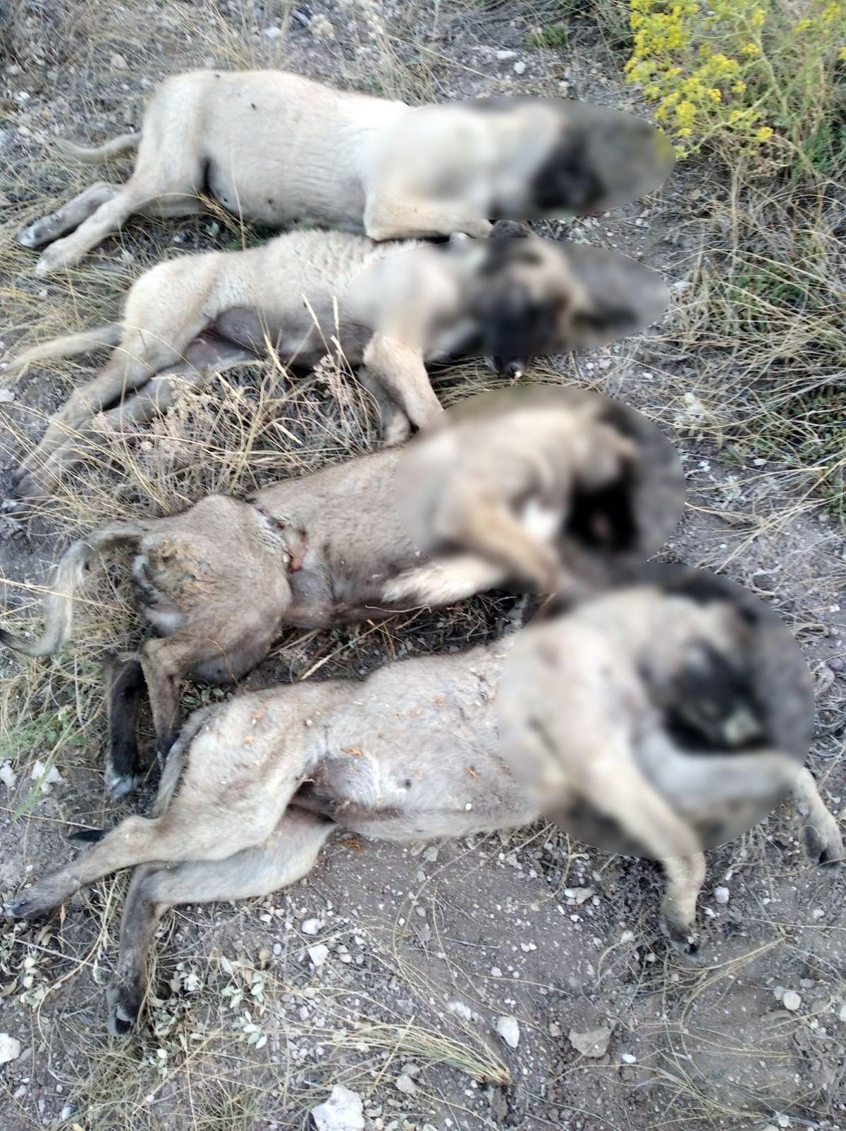 Ankara da 5 sokak köpeği ölü bulundu #1