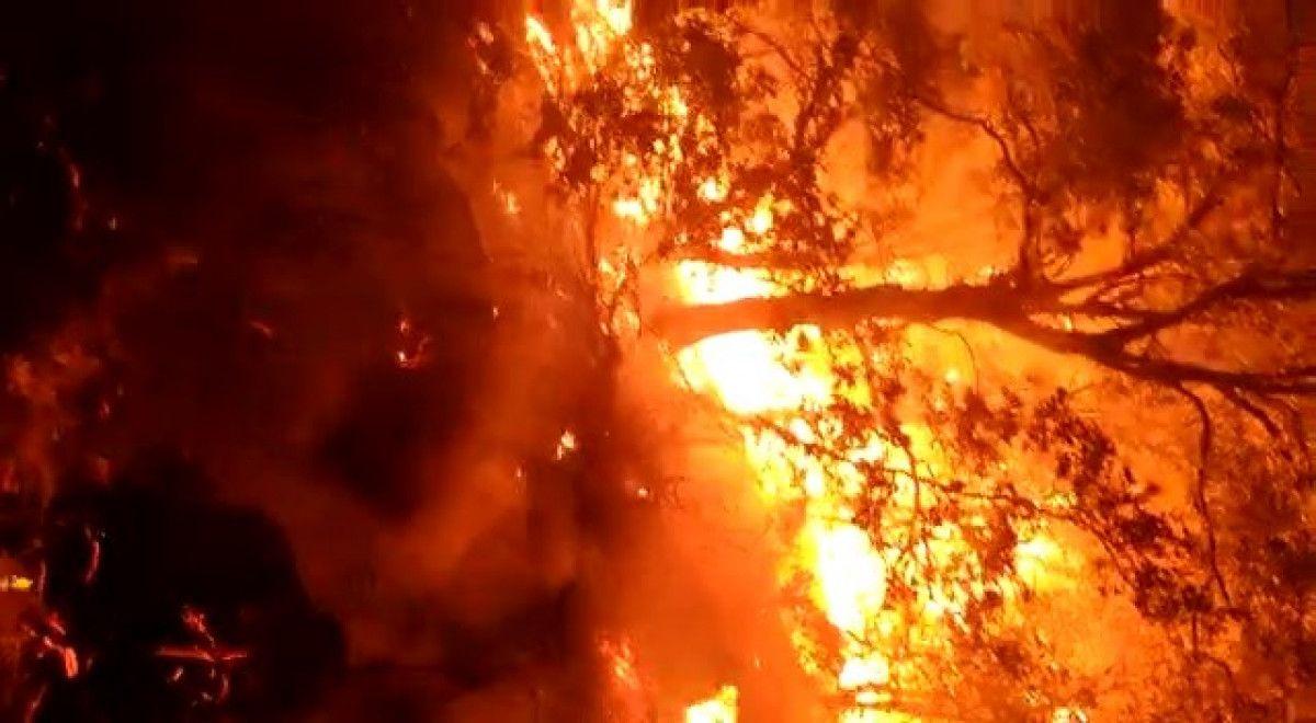 Bingöl de çıkan orman yangını, kontrol altına alındı #5