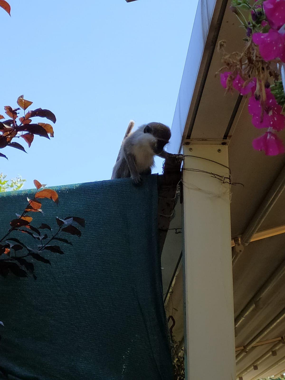 Ankara da hayvanat bahçesinden maymun kaçtı #2