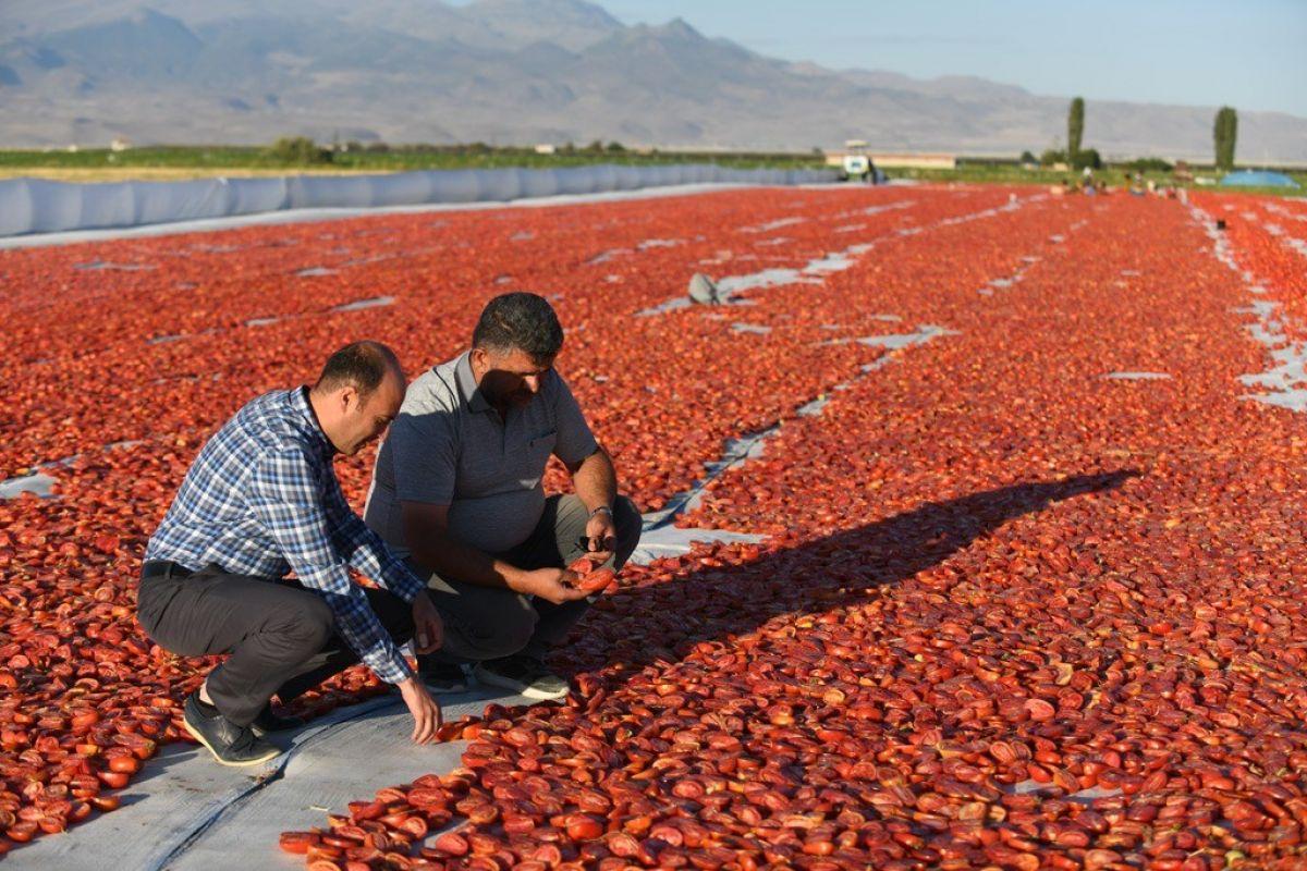 Erciyes eteklerinde kuru domates mesaisi #6