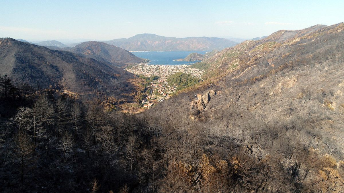 Muğla yangınlarında 52 bin hektar alan zarar gördü #1