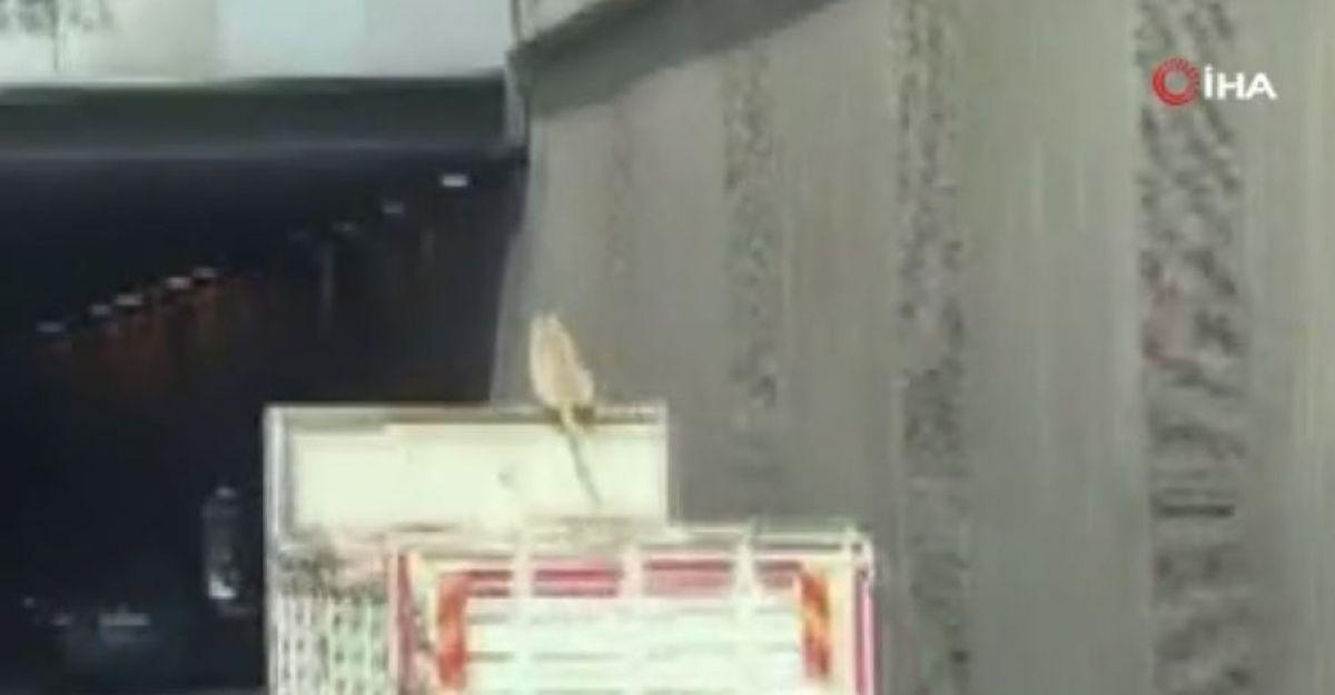 Kocaeli de bir köpek, kamyonun üzerinde seyahat ederken görüntülendi #1